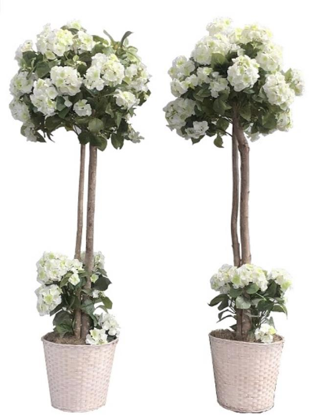 Where to find Wedding White Topiary in Virginia Beach